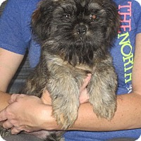 Adopt A Pet :: Bruno - Greenville, RI