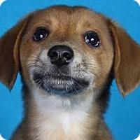 Adopt A Pet :: Fletch - Minneapolis, MN