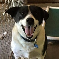 Adopt A Pet :: Ralphie - Thomasville, NC