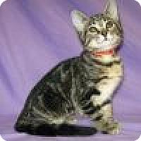 Adopt A Pet :: Kalypso - Powell, OH