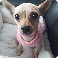 Adopt A Pet :: EVE - Los Angeles, CA