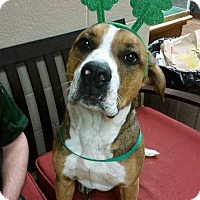 Adopt A Pet :: Gus - Newcastle, OK