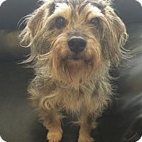 Adopt A Pet :: Bridget - Oak Ridge, NJ