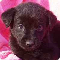Adopt A Pet :: Maggie - Enfield, CT