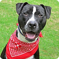 Adopt A Pet :: Toby - Raleigh, NC