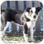 Photo 2 - Border Collie/Australian Cattle Dog Mix Dog for adoption in Tiffin, Ohio - Jaxx--Courtesy Posting