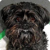 Adopt A Pet :: LOLLIPOP - ADOPTION PENDING - Little Rock, AR