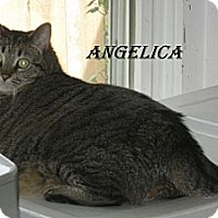 Domestic Shorthair Cat for adoption in Shelby, North Carolina - Angelica