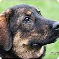 Adopt A Pet :: Xena - Rigaud, QC