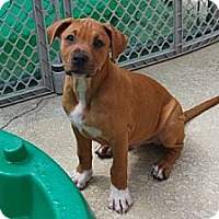 Adopt A Pet :: Riley - Minneola, FL