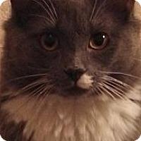 Adopt A Pet :: Joey - Chesapeake, VA