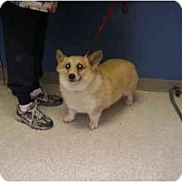 Adopt A Pet :: Marshall - Inola, OK