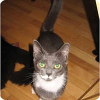 Adopt A Pet :: Asher - Portland, ME