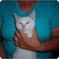 Adopt A Pet :: Flame - Riverside, RI