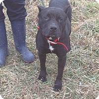 Adopt A Pet :: #387-14 ADOPTED! - Zanesville, OH