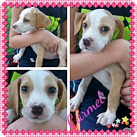 Adopt A Pet :: Carmel - Stamford, CT