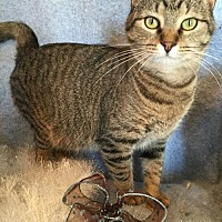 Adopt A Pet :: Mistletoe - Fredericksburg, VA