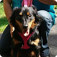 Adopt A Pet :: Lacy - selden, NY