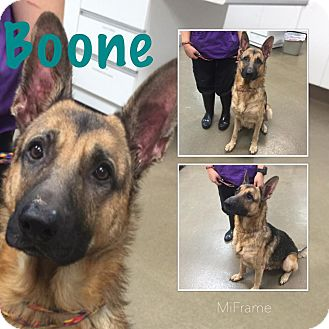 German Shepherd Dog Mix Dog for adoption in Steger, Illinois - Boone