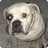 Adopt A Pet :: Ricky - Beverly Hills, CA
