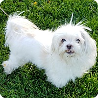 Adopt A Pet :: Tiny Tina - Sheridan, IL