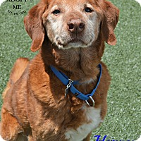 Adopt A Pet :: Harvey - Youngwood, PA