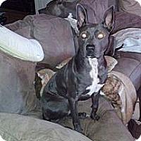 Adopt A Pet :: Gizmo - Charlotte, NC
