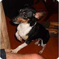 Adopt A Pet :: Woofy - Glen Burnie, MD