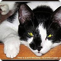 Adopt A Pet :: Theo - Orlando, FL