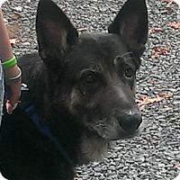 Adopt A Pet :: Buddy - Mill Creek, WA
