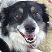 Adopt A Pet :: Tess - Oliver Springs, TN