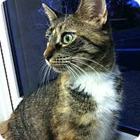 Adopt A Pet :: Honey - Trevose, PA