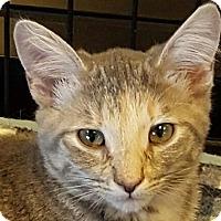 Adopt A Pet :: Kutie - Winchester, CA