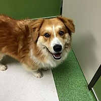 Adopt A Pet :: Allie - Stafford, TX