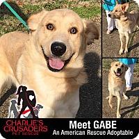 Adopt A Pet :: Gabe - Spring City, PA