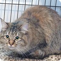 Adopt A Pet :: Grace - Monterey, VA
