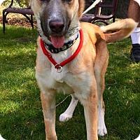 Adopt A Pet :: Carter - Mt. Airy, MD