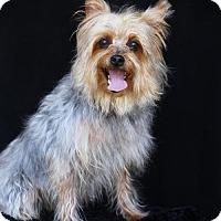 Adopt A Pet :: Holly - SAN PEDRO, CA