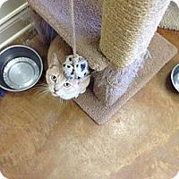 Adopt A Pet :: Penelope - Lake Charles, LA