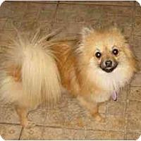 Adopt A Pet :: Diva - Rigaud, QC