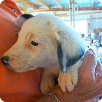 Adopt A Pet :: SKIPPY - Katy, TX