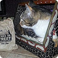 Adopt A Pet :: Hope - Harrisburg, NC