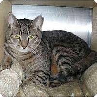 Adopt A Pet :: Linus - Colmar, PA