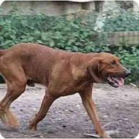 Adopt A Pet :: Wiley - Carrollton, GA