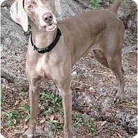 Adopt A Pet :: Skip  **ADOPTED** - Eustis, FL