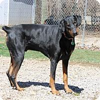 Adopt A Pet :: Bear - New Richmond, OH