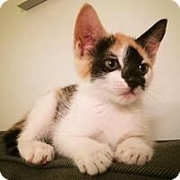 Adopt A Pet :: Rosie - Brooklyn, NY