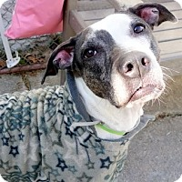 Adopt A Pet :: Bebo - Long Beach, NY
