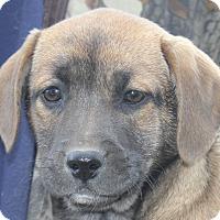 Adopt A Pet :: GRRRace - Colonial Heights, VA