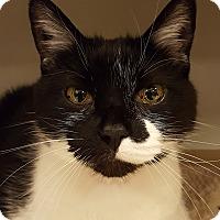 Adopt A Pet :: Kobu - Grayslake, IL
